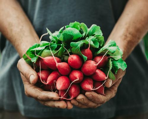 Fresh Produce Consortium is live!